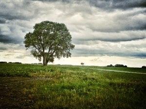 johnstad tree
